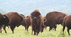 A Utah man's trail run at a state park turned into a near-death encounter when a group of bison gored and trampled him on his route. Kyler Bourgeous, a man who likes … 30 Year Old Man, Antelope Island, Pensacola Beach, Go Fund Me, Bison, Oklahoma, State Parks, Utah, National Parks
