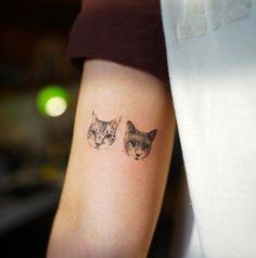 Cats by Nando