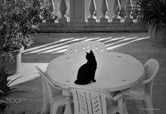 Black Cat. - Taken in Chianciano, Tuscany, Italy. (November 2016)