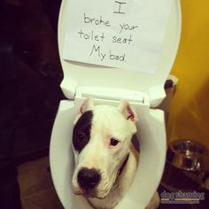 I heard a loud crash from our bathroom and discovered our Dogo Argentino, Baron, had somehow managed to completely break the seat off of the toilet. I am still mystified as to how he did it.