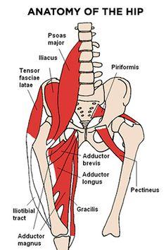 Anatomia de la cadera.