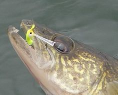Great jigging tips for walleye!