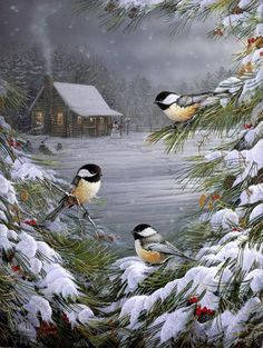 Sam Timm ~ chickadees on snowy branches ~ winter