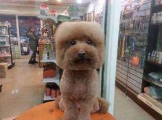 """""""O GRITO DO BICHO"""": Pet shop de Taiwan tosa animais de maneira nada co..."""
