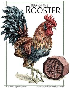 Image result for rooster drawings