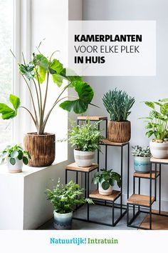 Idea Of Making Plant Pots At Home // Flower Pots From Cement Marbles // Home Decoration Ideas – Top Soop Room With Plants, House Plants Decor, Indoor Garden, Indoor Plants, Home And Garden, Small Home Offices, Decoration Plante, Office Plants, Plant Shelves