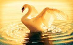 <p></p><p>A magia da vida consiste em você derramar amor por onde passar e acrescentar gestos de carinho à todos que cruzarem o seu caminho. Tenha uma boa tarde!</p>
