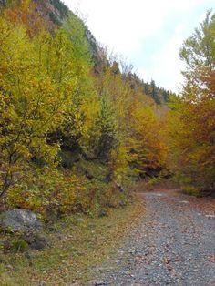 Un camino de otoño