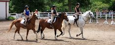 Summer Camp | Sunnybrook Stables Day Camp, Camps, Stables, Horses, Summer, Animals, Summer Time, Animales, Horse Stables