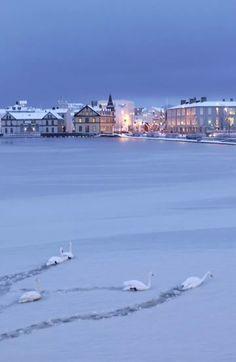 Swans on frozen lake - Reykjavik, Iceland Iceland Travel, Reykjavik Iceland, Places To Travel, Places To See, Places Around The World, Around The Worlds, Iceland Island, Voyage Europe, Winter Scenes