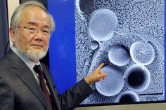 Ёсинори Осуми – специалист по клеточной биологии из Японии – стал Нобелевским лауреатом в области физиологии и медицины Началась Нобелевская неделя, в ходе которой будут распределены самые почетные научные награды и названы лауреаты области медицины и физиологии, физики, химии. Лауреат в области медицины и физиологии был н�