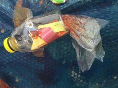 bright fish - Plastic Free July art installation displayed at Manly Sea-Life