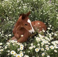 A baby foal laying among white flowers. A baby foal laying among white flowers. The post A baby foal laying among white flowers. appeared first on Diy Flowers. Pretty Horses, Beautiful Horses, Animals Beautiful, Pretty Animals, Cute Baby Animals, Animals And Pets, Funny Animals, Wild Animals, Spring Animals