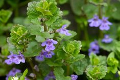 5 rostlin, které nejsou jen tak nějaký plevel! Znáte je? Herbs, Plants, Herb, Plant, Planets, Medicinal Plants