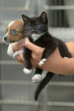 Nice duo! Pup 'n' Kitten...Ain't they cute?