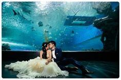 my aquarium wedding