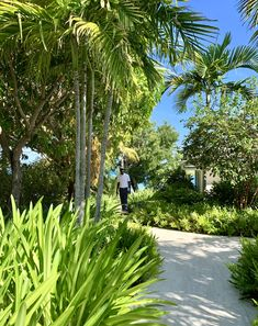 Our garden is a large part of Calabash. Here you will not only find balance and tranquillity but there is also a lot to discover. Jermaine is a great guide and will give you a great tour. Caribbean, Beach House, Most Beautiful, Sidewalk, Tours, Island, Garden, Beach Homes, Garten