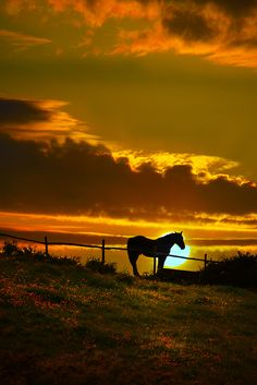 The horse and the sunset....beautiful.