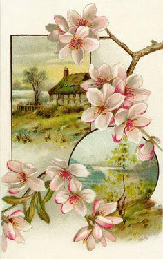 OldDesignShop_VictorianTradeCardPinkFlowers.jpg (964×1532)
