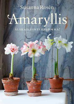 Amaryllis favorit