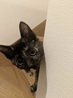 I found a surprise peeking around the corner while coming up the stairs! by Slvmoon cats kitten catsonweb cute adorable funny sleepy animals nature kitty cutie ca