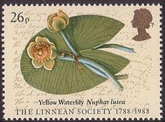 Bicentenary of Linnean Society. Archive Illustrations 26p Stamp (1988) Yellow Waterlily (Major Joshua Swatkin)
