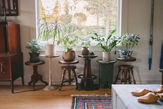 Plant stands and potted plants inside crocks