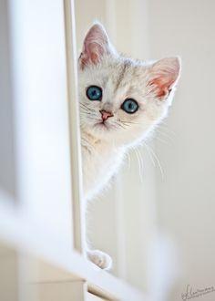 Alguém viu um gatinho?