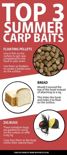 Carp fishing infographic with the best carp fishing bait for summer. Happy angling!