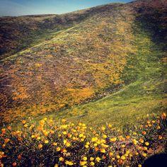 10 Best Morgan Hill Ca Images Morgan Hill California