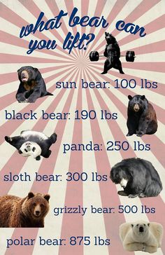 What bear can you lift?  (Oh my god I made this and now it's on Pinterest! I'm famous!!)