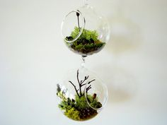 These mini hanging terrariums are an awesome way to add pant life without running out of table space Hanging Terrarium, Moss Terrarium, Terrariums, Plants In Jars, Air Plants, Interior Decorating, Interior Design, How To Look Pretty, My Dream Home