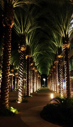 Night lights at Scottsdale Quarter.