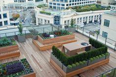 Vancouver rooftop Garden