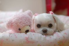 A puppy and a pink teddy bear! Oh my goodness. The cutest little girl ever <3