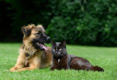 Country Home Kennels (countryhomekennels) on Pinterest