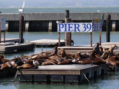 Sea lions at Pier 39 in SF.