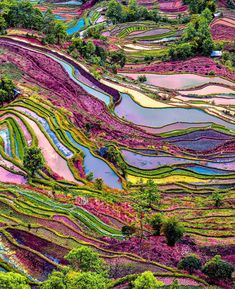 "awendala: ""Yuanyang rice terraces, Yunnan, China """