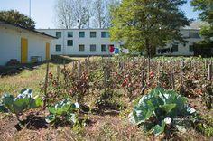 ha nem is szuperfalu, de szociális szövetkezet hajléktalanokból - Likócs (Győr-Moson-Sopron) Plants, Plant, Planets