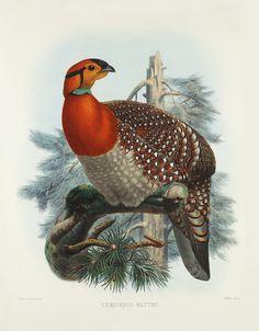 elliot_pheasants_1_26_1