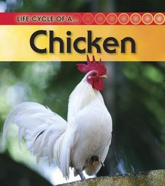 Chicken (Life Cycle of a . . .) by Angela Royston http://www.amazon.com/dp/1432925407/ref=cm_sw_r_pi_dp_ORirxb1T8HJZC