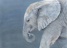 'Amendola' Baby Elephant (Prismacolor colored pencils) by Rachael Wild