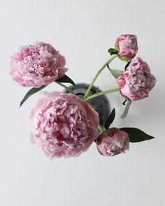 "happymomdiary l lifestyle blog on Instagram: ""🌺 PFINGSTMONTAG ______________________________________ . Happy Pfingsten ihr Lieben! . Ich liebe Pfingstrosen! Wer noch? .…"" Plants, Blog, Instagram, Jewelry, Peonies, Amor, Floral, Jewellery Making, Jewelery"