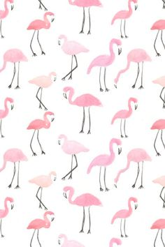 Flamingos, behang