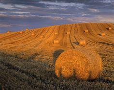 Field in Scotland by Ian Cameron