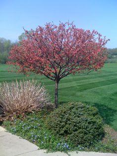 Spring! Outdoor Spaces, Gardens, Spring, Nature, Plants, Beauty, Outdoor Living Spaces, Naturaleza, Outdoor Gardens