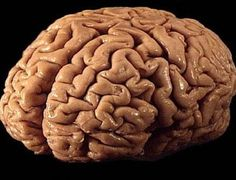 Brain Tapeworms: More Common Than You Might Think