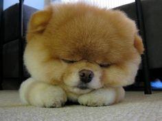 Sleepy Boo