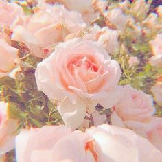 Image uploaded by ➭ 𝐭𝐡𝐞𝐦𝐞𝐬 🌷🔭🚿. Find images and videos about pink, aesthetic and nature on We Heart It - the app to get lost in what you love. aesthetic room GIVE CREDIT IF USING. 🌸 on We Heart It Baby Pink Aesthetic, Peach Aesthetic, Nature Aesthetic, Aesthetic Colors, Flower Aesthetic, Aesthetic Images, Aesthetic Collage, Aesthetic Photo, Aesthetic Vintage