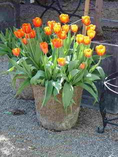 Container gardening can be very rewarding if you follow a few guidelines, we will teach you how to plant and grow beautiful container gardens.